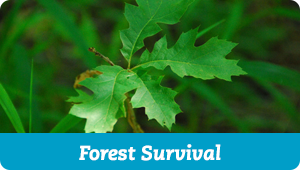 Forest Survival