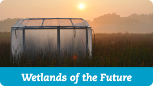 Wetlands of the Future