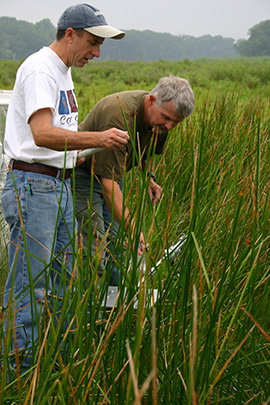 Scientists working in the marsh.