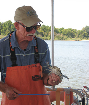 Scientist holding blue crab.