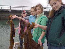 Asian Kelp Volunteers