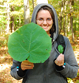 Photo comparing non-native princesstree leaf and American holly leaf.