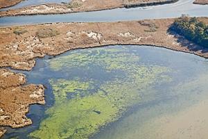 Aerial photo of algae bloom in Chesapeake Bay.