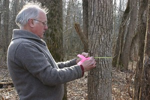 Photo of Jess Parker using a dendrometer to measure tree growth.