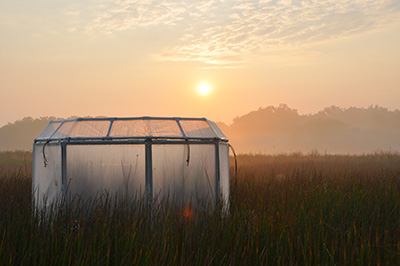 Experimental chamber in the Global Change Research Wetland.