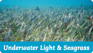 Underwater Light and Seagrass