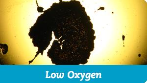 Low Oxygen
