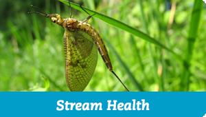 Stream Health